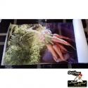 Impression Photos sur Banderoles et Bâches - StickHappy.com